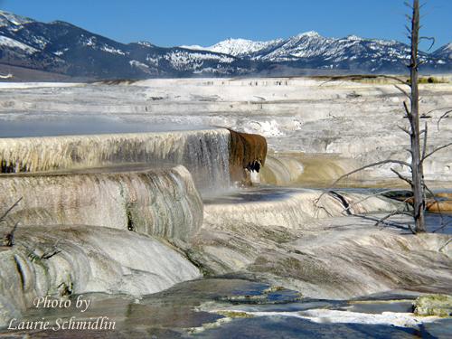 Upper_terrace_mammoth_yellowstone